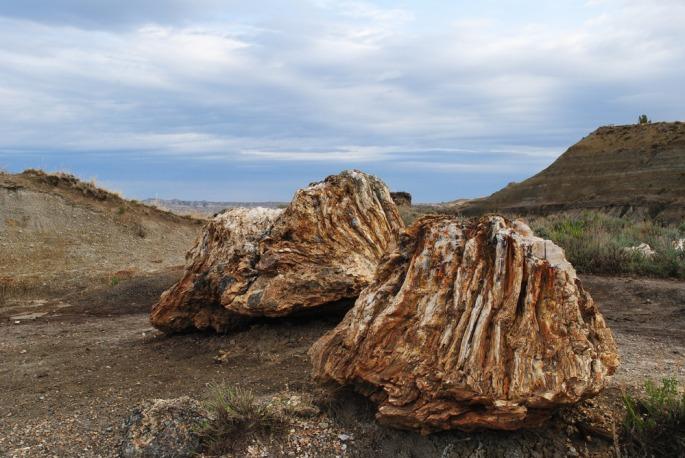 Petrified tree stumps High Res.