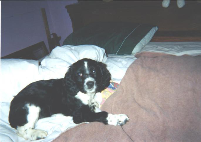 Puppy 001